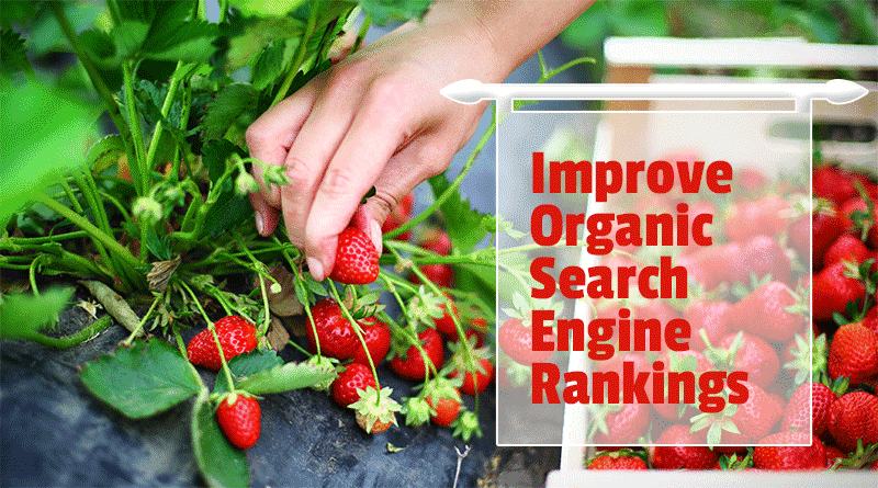 improve-organic-search-engine-rankings